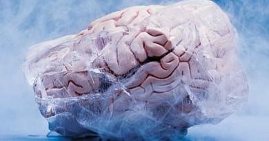 creier de iepure innghetat - crioconservare
